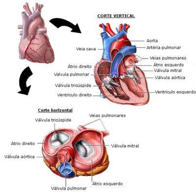 Sopro no coração: causa, sintomas e tratamento da doença