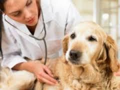 Leishmaniose: quais os sintomas e tratamento e como identificar